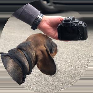 Kfz-Gutachter Hamburg Hanseatische Sachverständige Hund
